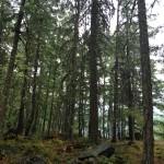 Sacred Trees. Copyright 2015 Ariel F. Hubbard www.arielhubbard.com