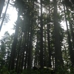 Forest bathing is healing.