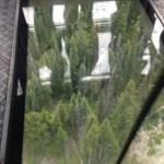 Treetops through the gondola glass bottom. Copyright 2015 Ariel F. Hubbard www.arielhubbard.com